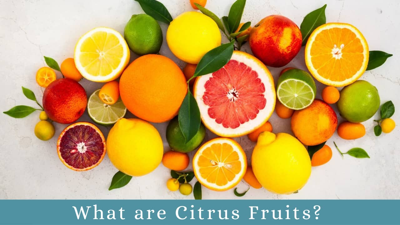 What are Citrus Fruits